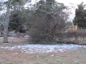 Broken branches in Sumter, SC. #WinterMess