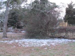 Broken branches in Sumter, SC. #WinterMess